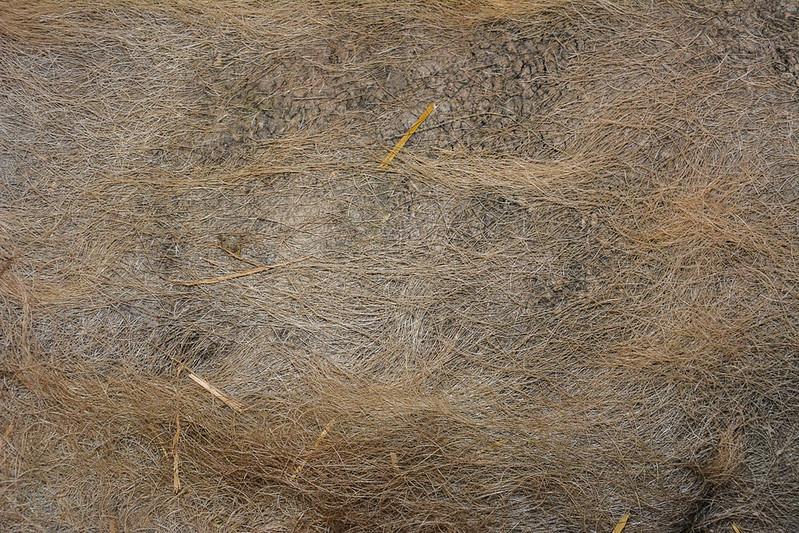 animal-fur-closeup-texturepalace-13