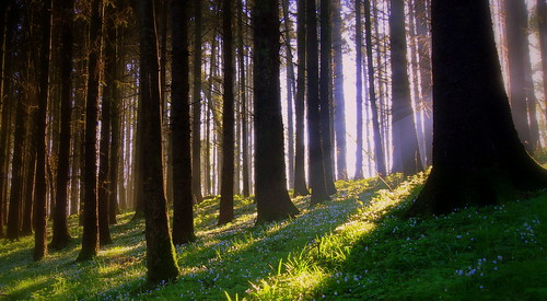 morning ireland light shadow forest sunrise canon woods sigma explore rays monaghan ranks eos600d rebelt3i kissx5