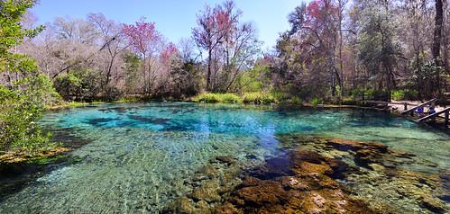 statepark panorama water spring florida springs highsprings ichetuckneesprings