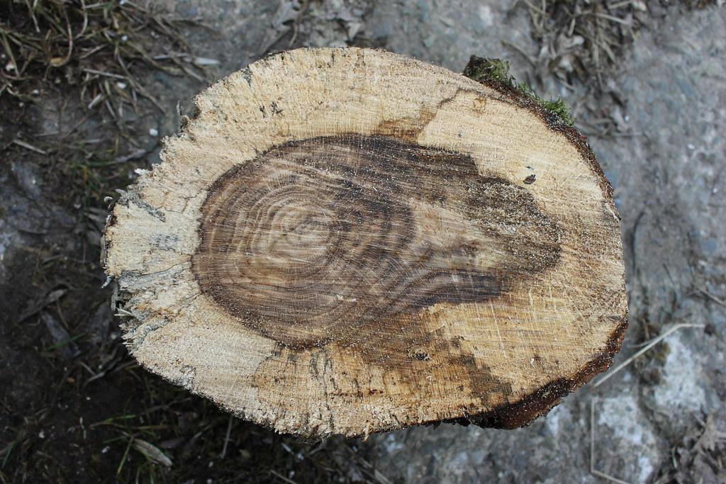 Oval log