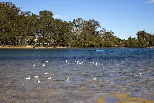 seascape beach nature water birds landscape coast gulls australia nsw newsouthwales aus nambuccaheads canonef24105mmf4lisusm canon6d