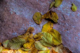 Rock&Leaves1-1.jpg | by pmbrmtrr