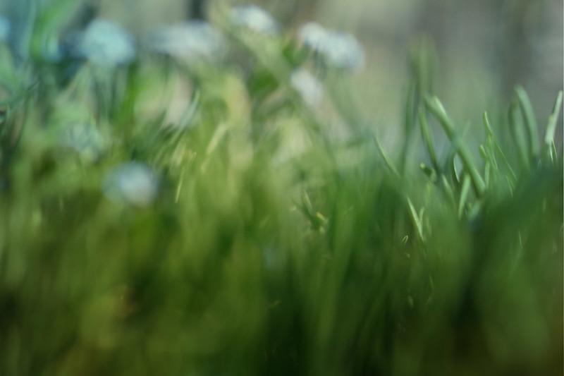blur-dreamy-texture-texturepalace-46