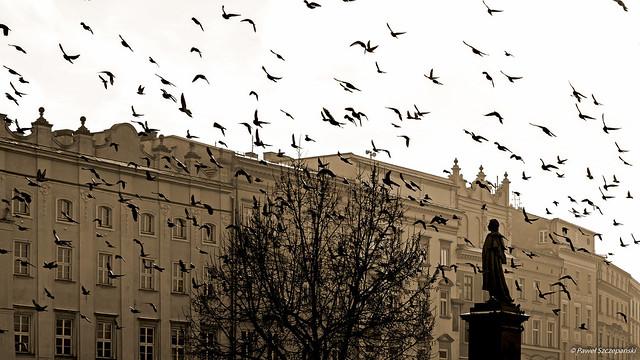 Mickiewicz amongst the pigeons