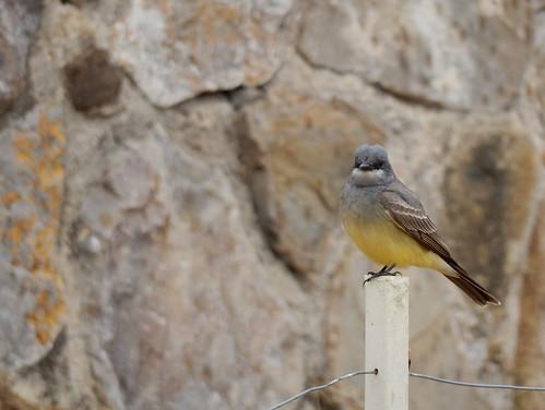 Monte Alban - bird