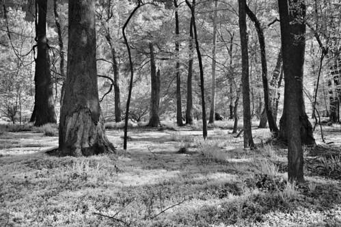 trees monochrome grass mono blackwhite spring afternoon northcarolina filter tufts riverbank piedmont dapple hoya blancetnoir r25a neuserivertrail emount nex6