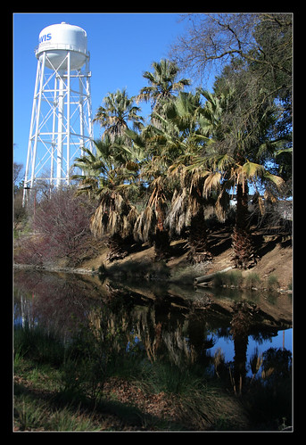 Water Tower and Palms   by ghirson