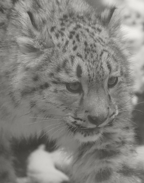 Tg Nbg      kleiner Leopard (soft)      160103