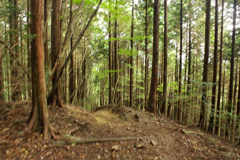 川乗山 登山