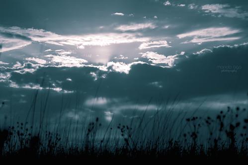 park light sunset sun sunlight nature grass silhouette clouds evening meadow tint thegalaxy