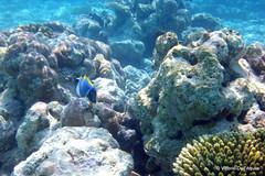 Underwater - Sott'acqua
