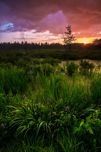 sunset landscape colorful swamp