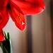 Print: Flowers