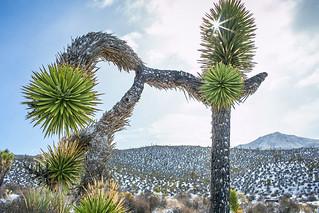 Desert Snow 3 | by tslclick
