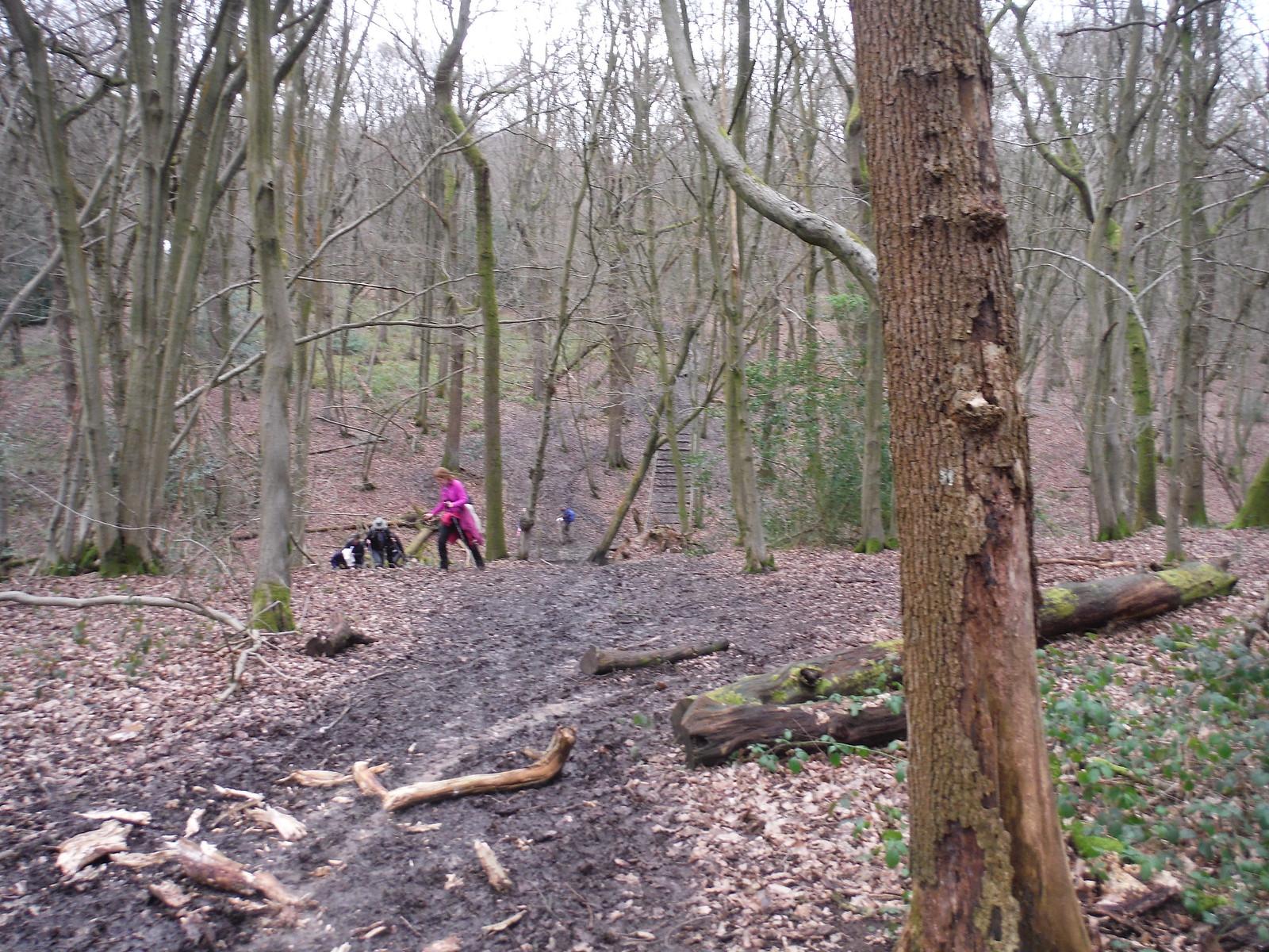 A steep brook crossing in Old Grove, Wormley Wood SWC Walk 168 Broxbourne Circular