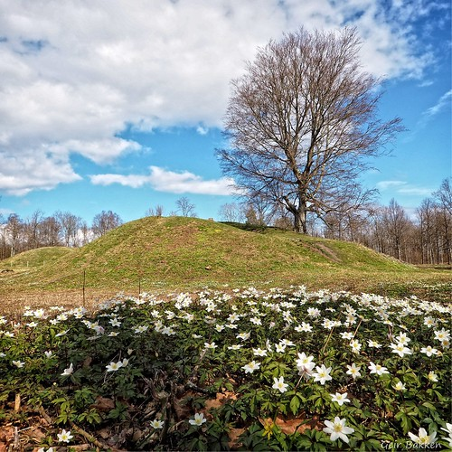 flowers flower tree norway landscape norge spring nice olympus omd niceview vestfold m43 yabbadabbadoo vikinggrave em5 olympusmftzuikodigitaled918mm