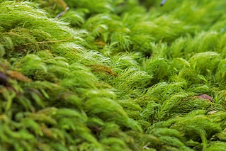 Moss Lamington National Park | by bidkev1 and son (see profile)