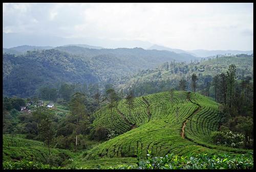 india nature december tamilnadu vv westernghats 2016 2015 wildlifehabitat valparai indianature coimbatoredistrict anamalais indiragandhiwildlifesanctuary anamallais anamalaitigerreserve elephantterrain