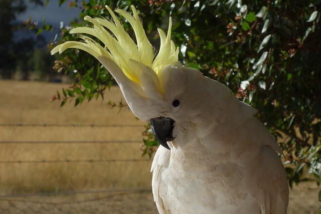 Cockatoos are so curious