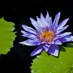 Beauty in Lavender ( 紫色之美 )