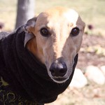 Greyhound Adventures at Cushing Memorial Park, Framingham MA, March 6th 2016