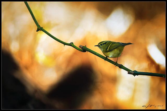 Extraordinary Nature..!!