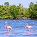 Pink Flamingos por elwandajo