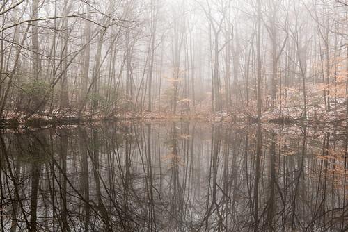 trees mist snow ny newyork reflection water fog pond woods westchestercounty southsalem lewisboro nikkor2470mmf28 nikon2470mmf28 onatrupreserve
