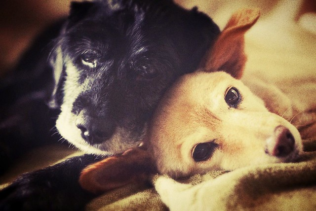 Mimi and Petite