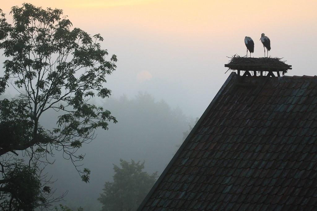 Żywkowo - bociania wioska / Zywkowo - stork village