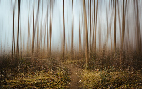 forest nature path blur trees carnation pacificnorthwest canoneos5dmarkiii canonef2470mmf28lusm fog foggy washington