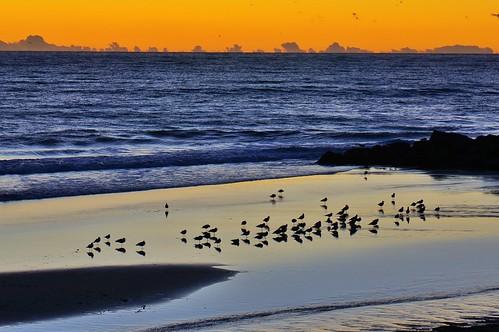 ocean california sunset beach water birds landscape losangeles vibrant goldenhour pacificpalisades pw willrogersstatebeach