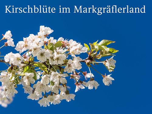 Kirschblüte_2016_044 | by alexanderanlicker