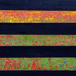 Texas Wildflowers Workshop_2015_Fences