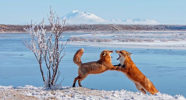 Snowy argument