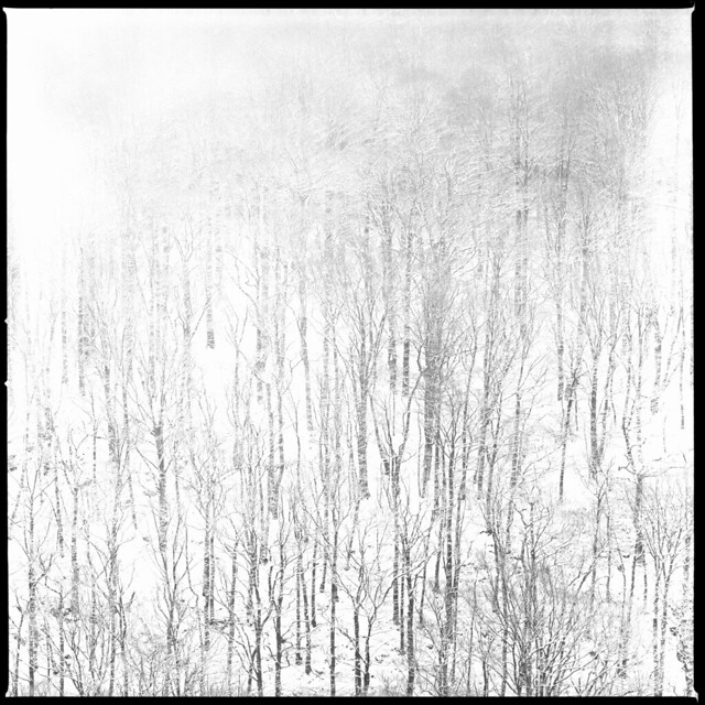 Söderåsen Winter - Kodak Tmax 100 exp*