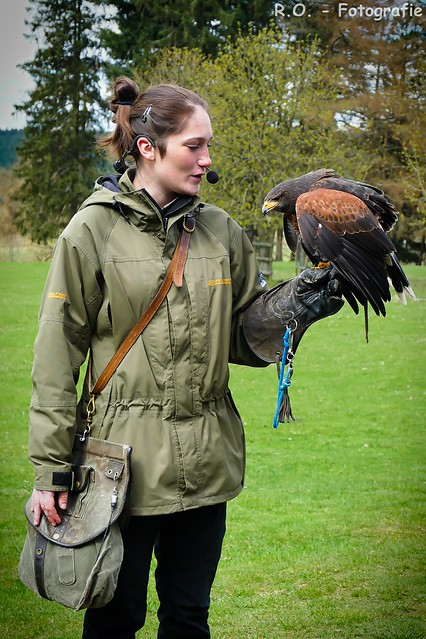 Falknerin - Harris Hawk / Falconer - Harris Hawk
