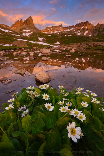 lake ice sunrise colorado basin wildflower