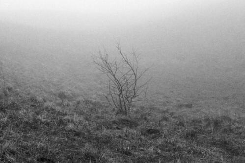 blackandwhite bw france tree fog analog canon eos noiretblanc 200asa 300 maxime auvergne argentique puydedome fomapan gobet