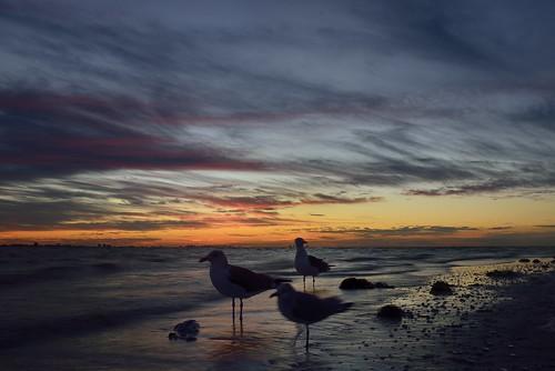 sea beach water beautiful skyline sunrise florida sanibel sanibelisland aurinko
