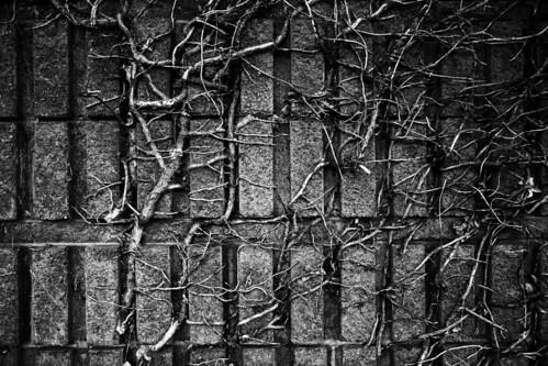 wall branches bricks vine hobart tangled