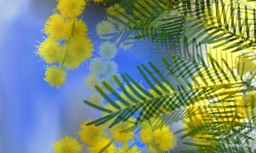 1-20160242 yellow blue green , my dream