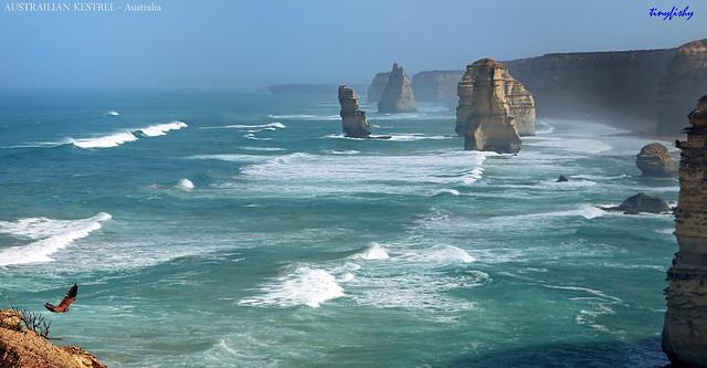 Australian Kestrel At The 12 Apostles
