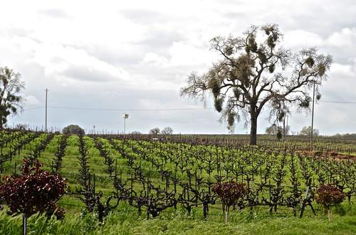 pink music clouds wine vineyards winetasting grapevines amadorcounty barreltasting cosumnesriver wilderottervineyard