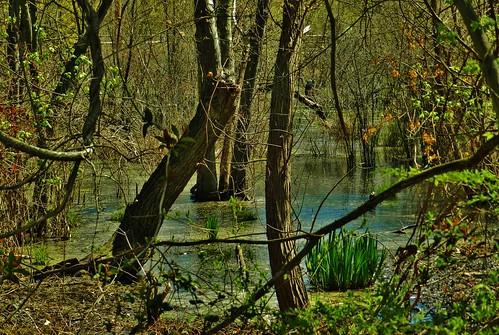 spring wetlands pasadena annearundelcounty batrail pasadenamaryland baltimoreannapolistrail marylandwetlands swampscenes marylandswamps spring2016