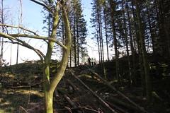 Skog og motorsag, foto Gerd Inger Årnes (11)