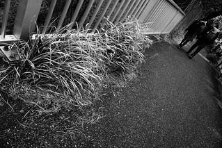 A6000 - Tokyo Walking - Omotasando to Midtown   by Fotois.com / Dmaniax.com / 246g.com
