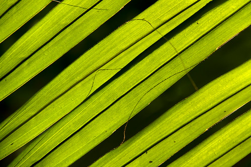 light kewgardens abstract green london leaves kew leaf westlondon canon7d canon18200mm