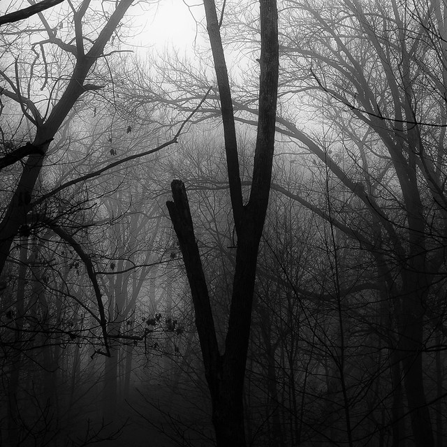 Lakeside Fog 041