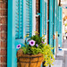 Teal Shutters and Window Box